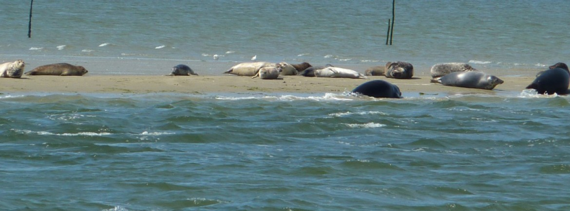 Seals can be spotted in abundance!
